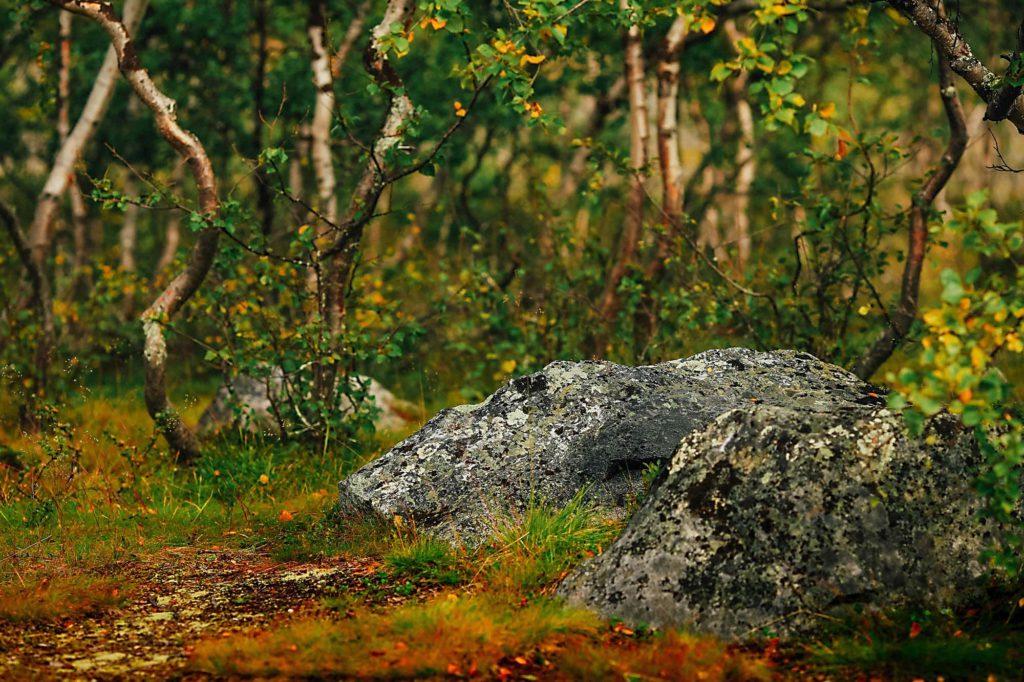 лапландия природа