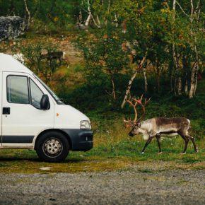 Свернул с дороги и наткнулся на стадо оленей!