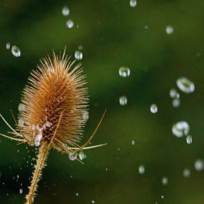 Как фотографировать капли дождя